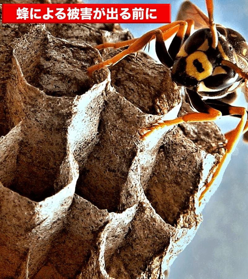 蜂による被害が出る前に